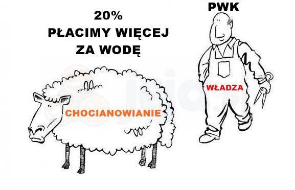 Strzyżenie Chocianowian z KASY